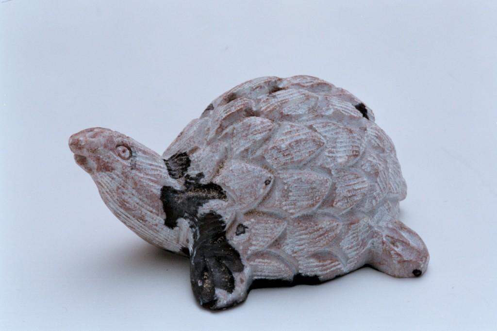 129菊石烏龜
