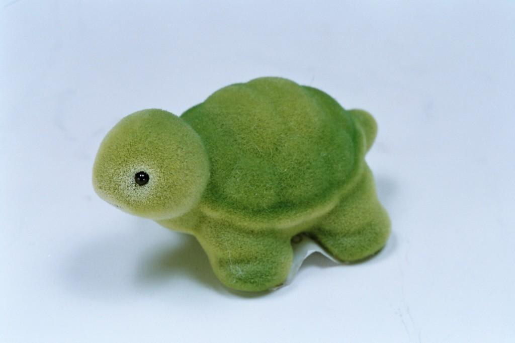 242絨毛烏龜