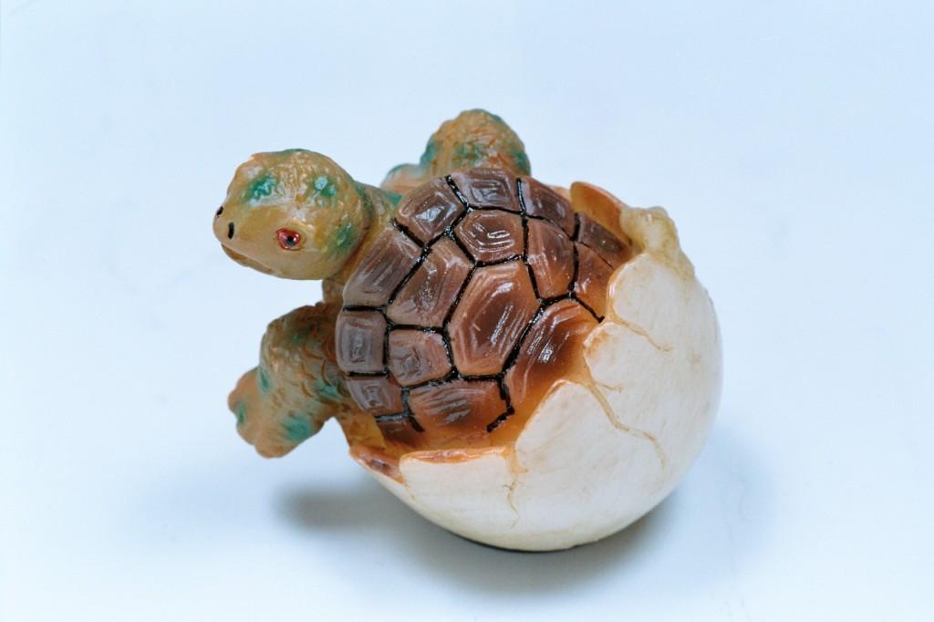 245波麗磁鐵烏龜