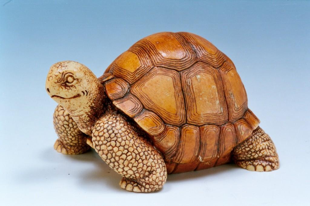 394棕色波麗亞達伯拉象龜