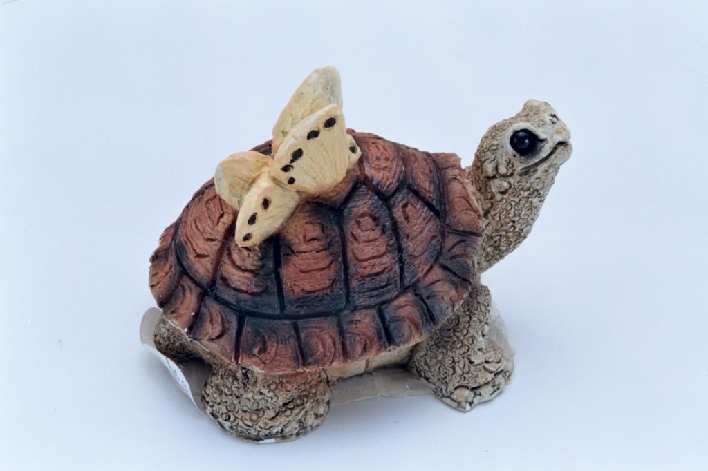 7波麗烏龜與蝴蝶