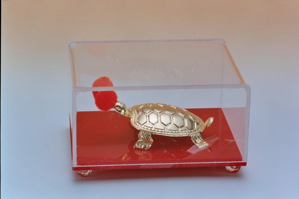 82黃金烏龜
